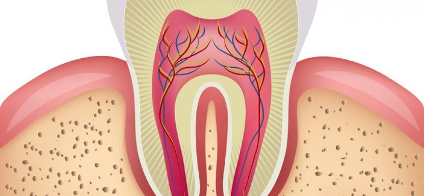 Pourquoi conserver la vitalité pulpaire ?